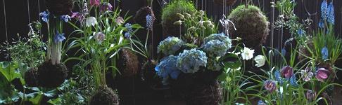 pflanzen in szene setzen sch ner wohnen. Black Bedroom Furniture Sets. Home Design Ideas