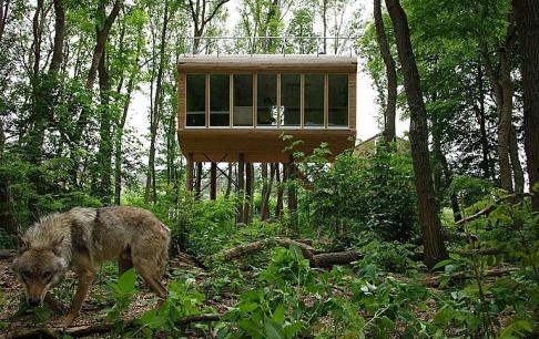 im baumhaus schlafen und dabei w lfe beobachten tipp des tages sch ner wohnen. Black Bedroom Furniture Sets. Home Design Ideas