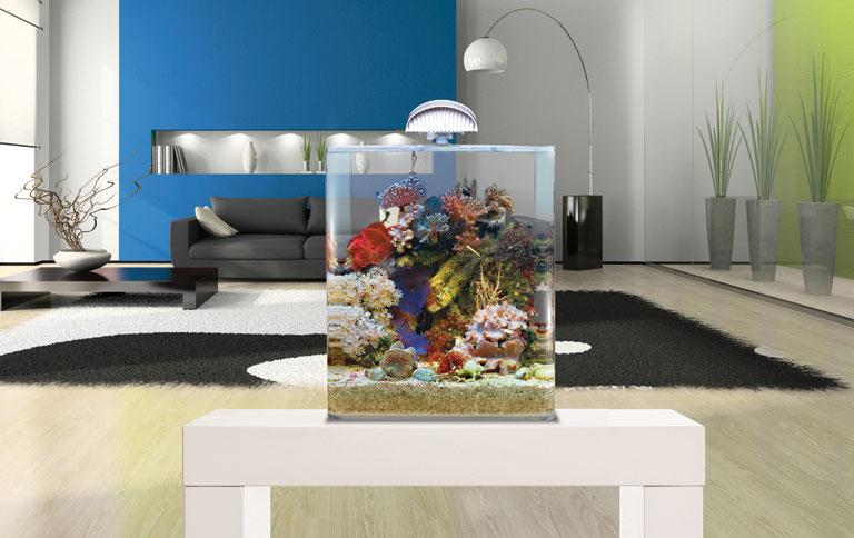 südsee im wohnzimmer - [schÖner wohnen] - Aquarium Wohnzimmer