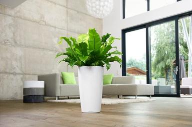 Moderne Wohnzimmer Pflanzen ~ Inspirierende Bilder Von Wohnzimmer ... Moderne Wohnzimmer Pflanzen