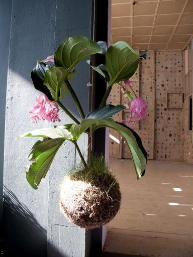 blumenampeln und gro e topfpflanzen f r die wohnzimmer lounge designer und stylisten entdecken. Black Bedroom Furniture Sets. Home Design Ideas